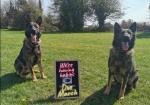 German Shepherd IKC Registered puppies for sale.
