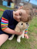 Golden retriever puppies for sale.