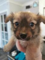 Puppy [sold].