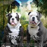 Bulldog Pup [sold].